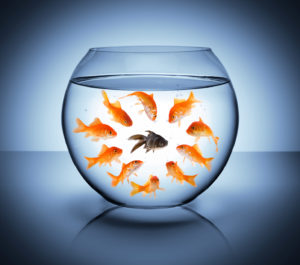 An image of fish in a fish bowl representing diversity in the workplace for a Lancaster Discrimination Lawyer.